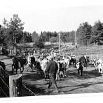 ◼Kivennavalta lähdettiin kahdesti evakkoon, sekä talvi- että jatkosodan  aikana.