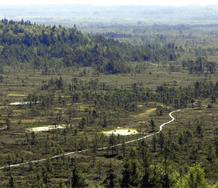 ◼Soita pitäisi suojella hiilinieluiksi. Tammelan Torronsuo heinäkuussa 2006.