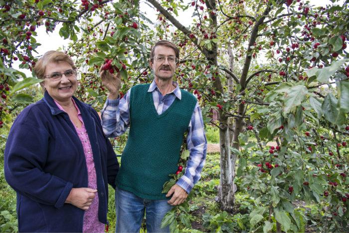 ◼Aleksandr ja Jelena Korsakov puutarhassaan Solomennojessa.
