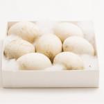 ◼Johanin keräämiä valkoposkihanhen munia löytyi ruotsalaisen Matsin kokoelmasta.