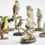◼Johan oli hakenut täyttöluvan vain mehiläishaukalle. Luvattomia lintuja ja eläimiä löytyi yli 80.