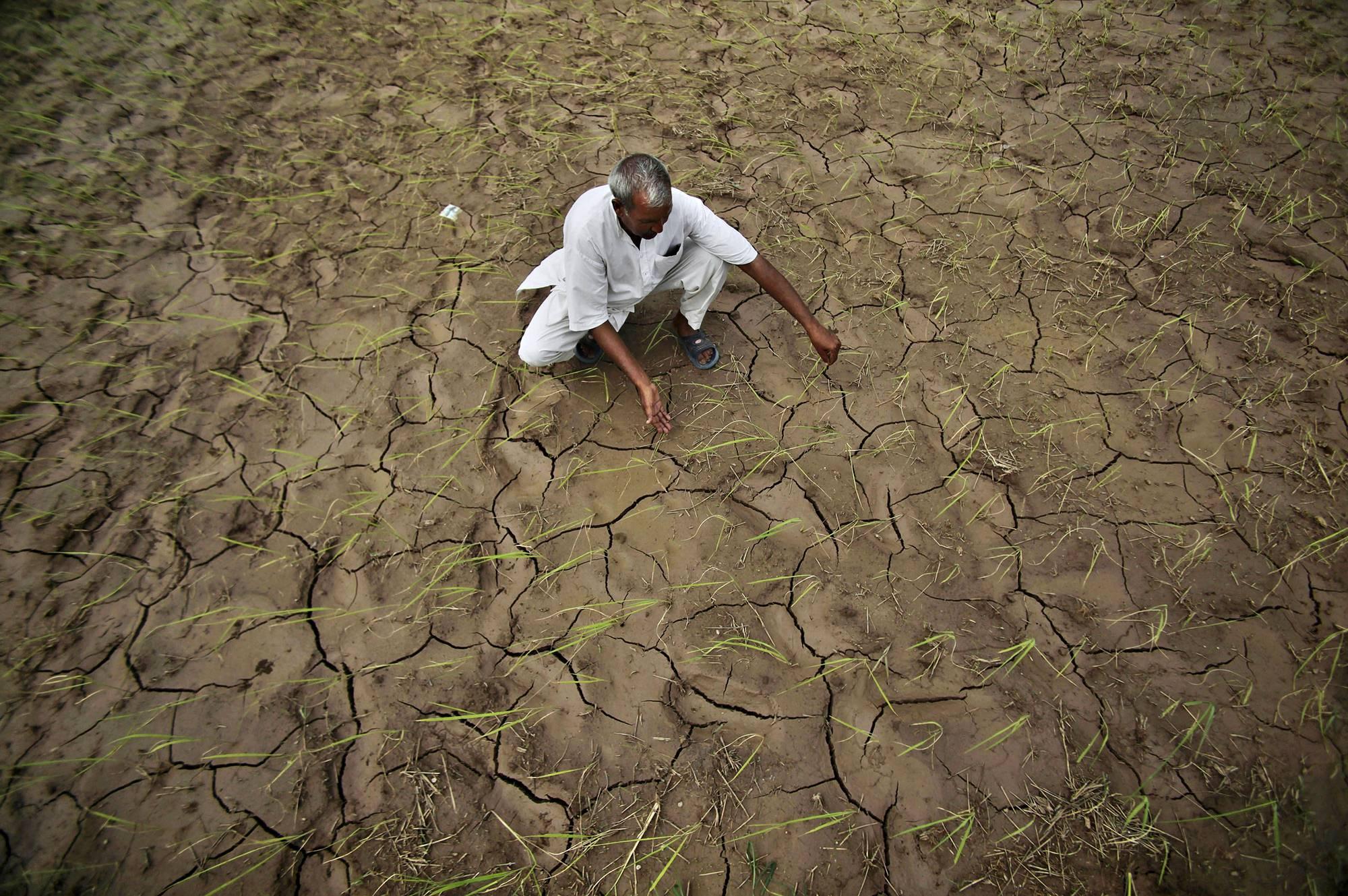 Kuivunut pelto Intiassa. Kuva vuodelta 2012.