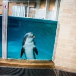 Leevi, 21, on syntynyt ja viettänyt koko ikänsä Särkänniemen delfinaariossa.