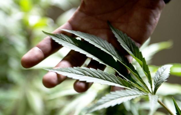 Kannabis Suomi