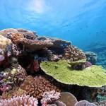 Ison valliriutan pohjoisosissa elävät korallit pystyvät sopeutumaan valtamerien lämpenemiseen, uusi tutkimus osoitti.