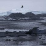 Jaakonsatamam jäävuonoa Grönlannissa kesäkuussa 2016.