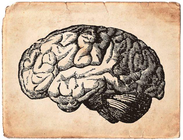 Suuret aivot ovat tyypilliset ihmisen suvulle.