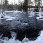 Kaivosyhtiö Dragon Mining on suunnitellut kultakaivosta Kitkajoen ja Oulangan kansallispuiston kupeeseen.