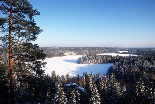 Suomalaista metsää.