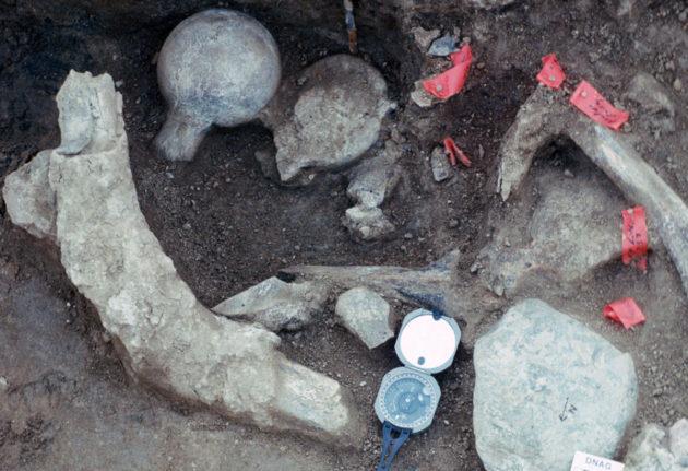 Nämä jäänteet saattavat venyttää Amerikan asutushistoriaa jopa 100000 vuotta. Vasemmalla ylhäällä mastodontin kylkiluu, keskellä reisiluun päät.