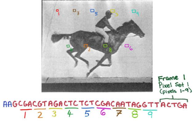 Uusi crispr-menetelmään perustuva työkalu mahdollistaa digitaalisen informaation tallentamisen bakteereihin.