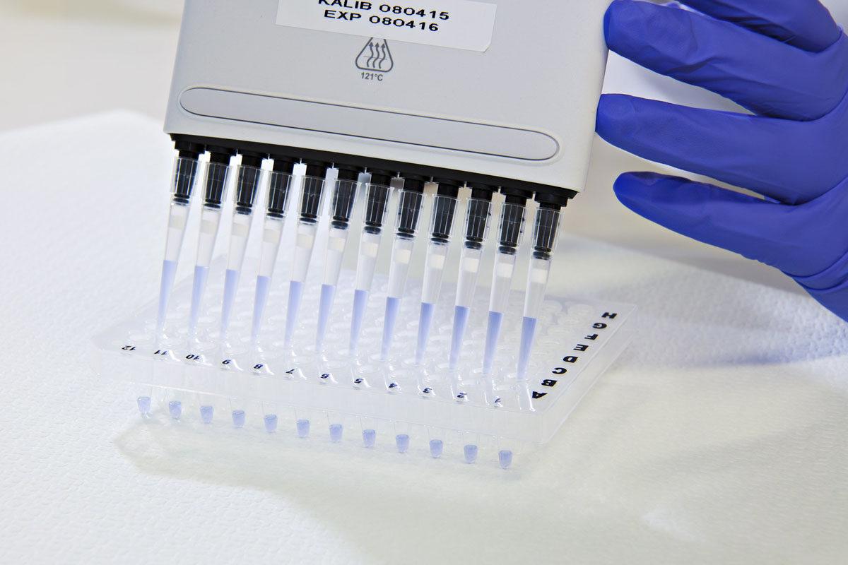 Kudostyypitystä SPR:n Veripalvelussa elokuussa 2015: monikanavapipetti ja kuoppalevy, jossa on potilaiden DNA-näytettä.