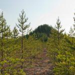 Puuvuori-teos tunnetaan ulkomailla paremmin kuin Suomessa.