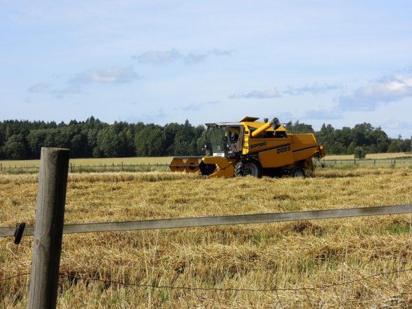 Viljaa korjattiin Haltialan maatilan pellolla Helsingissä 4. syyskuuta 2017.