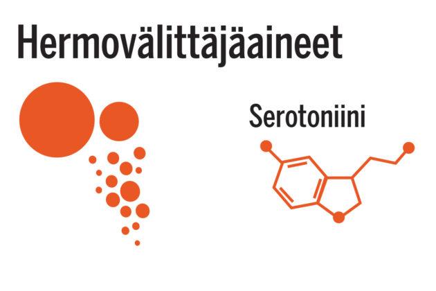 Mikrobit tuottavat suolistossa hermoston välittäjäaineita, kuten serotoniinia. Ne voivat vaikuttaa mieleen ainakin kiertäjä- eli vagushermon välityksellä.
