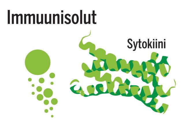 Suolistomikrobit voivat saada immuunisolut erittämään sytokiineja, viestiaineita, jotka matkaavat aivoihin verenkierron mukana.  Ne osallistuvat tulehduksen säätelyyn.