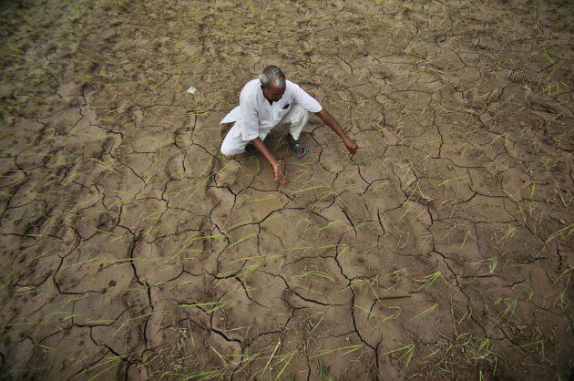 Kuivunutta viljelysmaata Ranbir Singh Purassa Intiassa 3. elokuuta 2012.