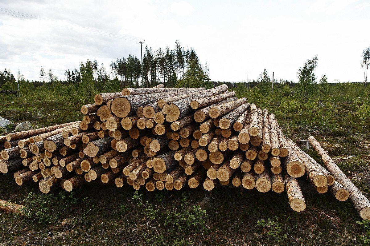 Hakattua metsää Kinnulassa 2. heinäkuta 2017.