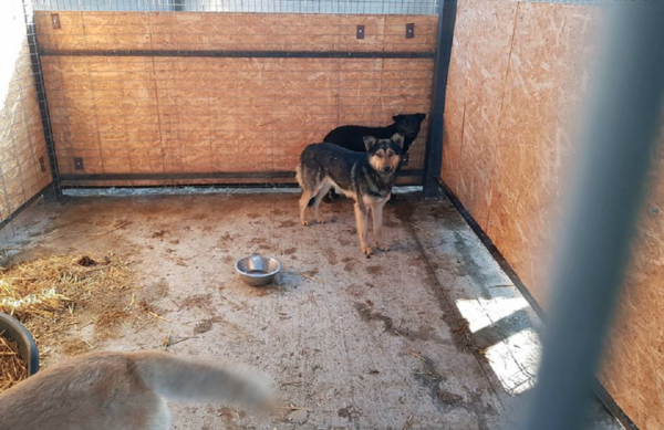 Koiratarhalle on lopettamispäätöksen jälkeen asennettu paneelit, jotka estävät näkemästä tarhaan sisään.