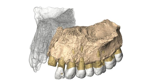 3D-malli Israelista löytyneestä muinaisihmisen leukaluusta.