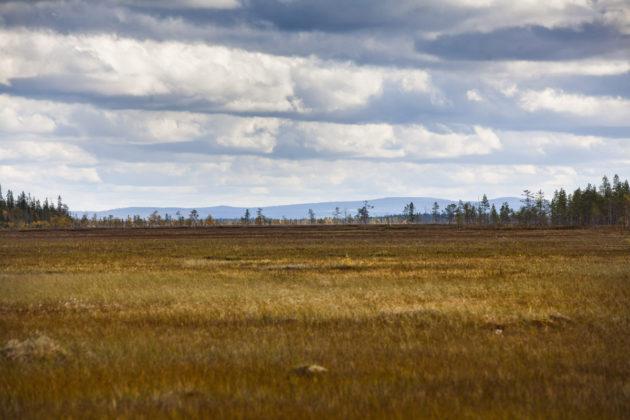 Sodankylän Viiankiaapa syksyllä 2011.