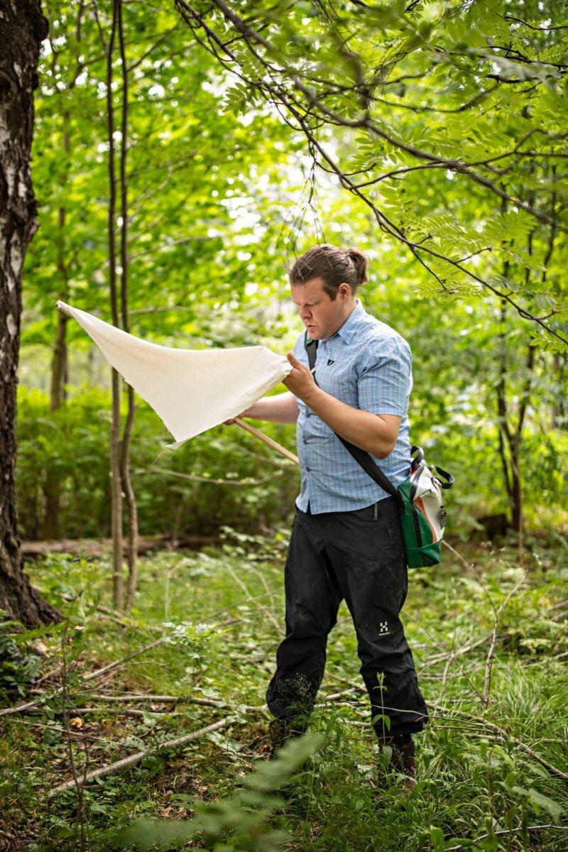 Tuomas Aivelo etsii punkkeja valkoisesta lakanasta, jolla on pyyhkinyt metsän aluskasvillisuutta.