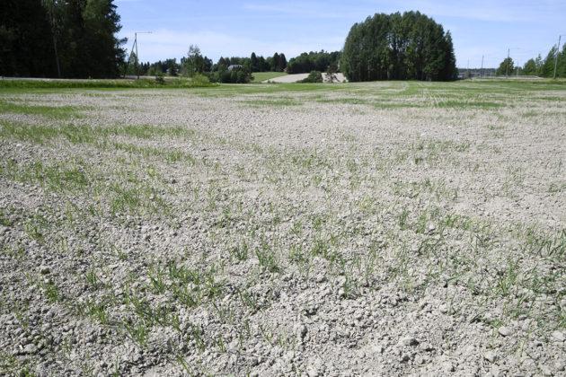 Kuivaa peltoa Vantaalla 3. kesäkuuta 2018.
