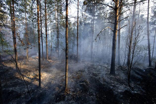 Pyhärannan metsäpalo 18. heinäkuuta 2018.