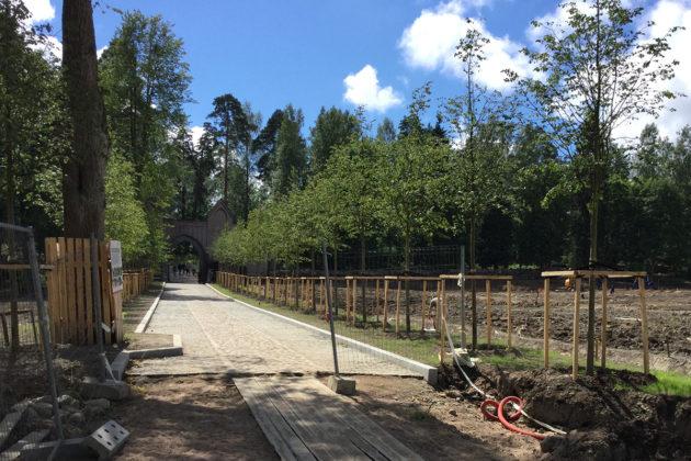 Monrepos-puistoon johtava lehtipuukuja kunnostustöiden jälkeen.