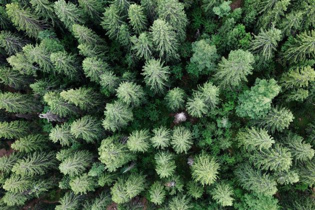 Metsää Laajavuorella Jyväskylässä torstaina 28. kesäkuuta 2018.