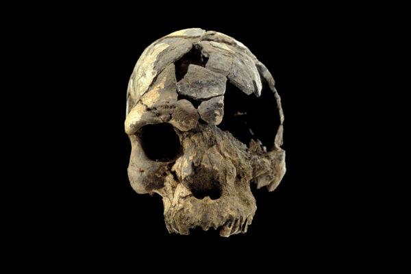Nykyihmisen (homo sapiens) kallo, jonka iäksi tutkijat ovat arvioineet noin 160 000 vuotta.