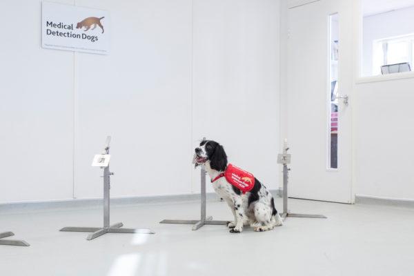 Freya on yksi malariaa haistamaan koulutetuista koirista.