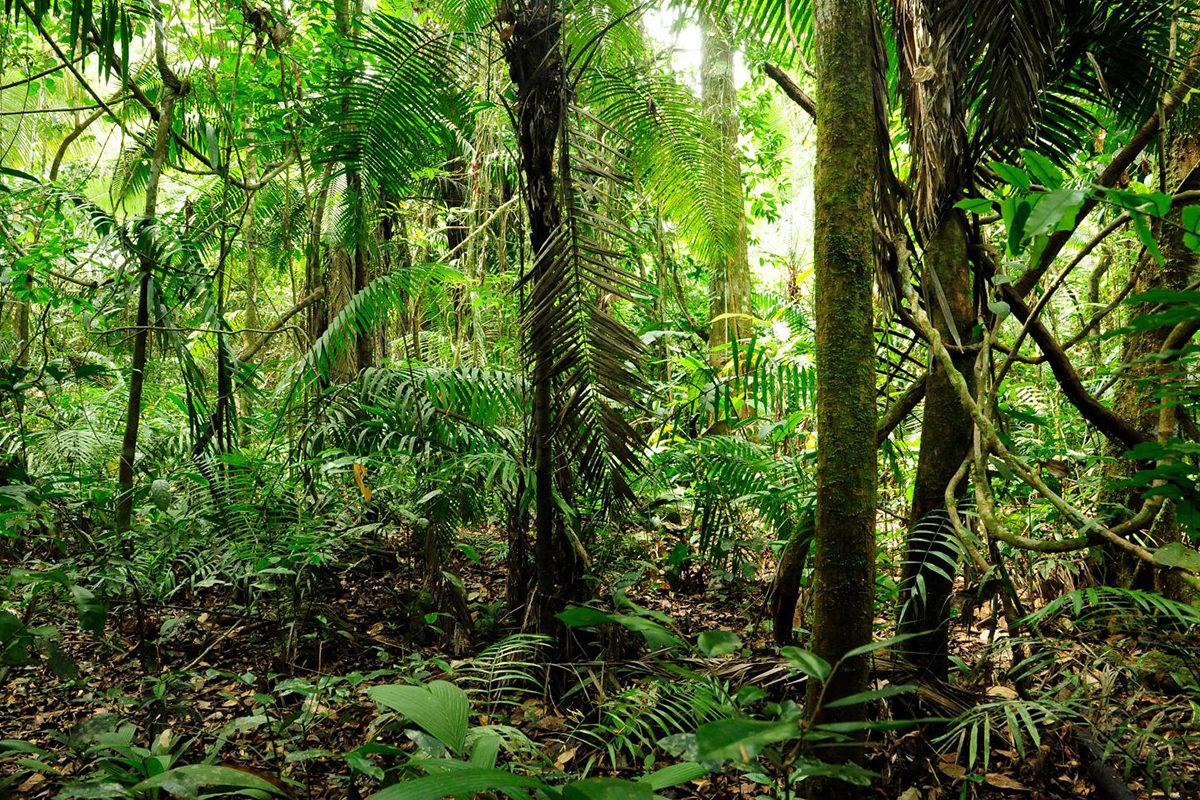 Enää vajaa neljäsosa planeetan maapinta-alasta on luonnontilassa, kuten tämä sademetsä Ecuadorissa.
