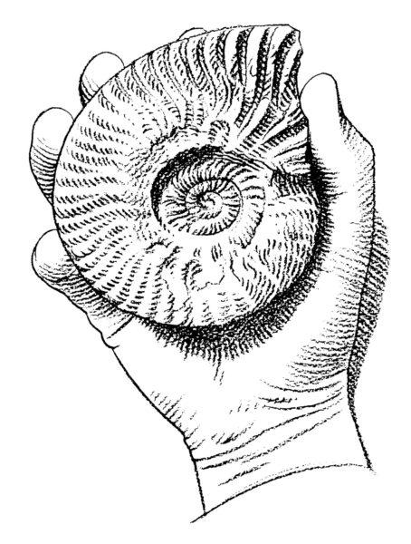 Merieliöiden fossiilit johtivat tutkijat maailmanloppujen jäljille.