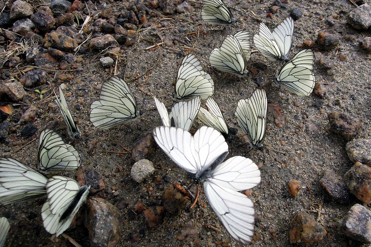 Perhosia Sisällä