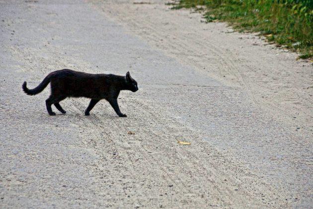 Mitä tietä ylittävä musta kissa merkitsee?
