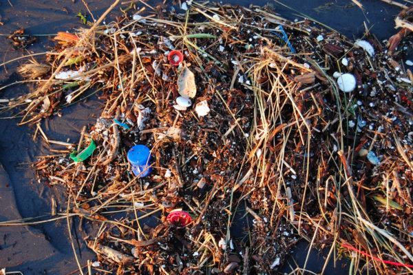 Muovijäte haittaa sekä suuria että kaikkein pienimpiä mereneläviä.
