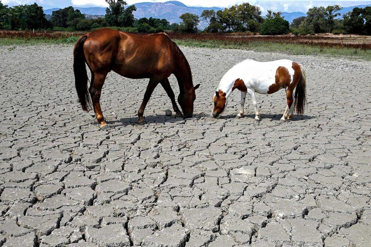 Lämpöennätyksiä on rikottu kesällä useissa Euroopan maissa.