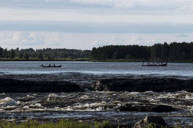 Lohensoutajia Tornionjoen Kukkolankoskella.