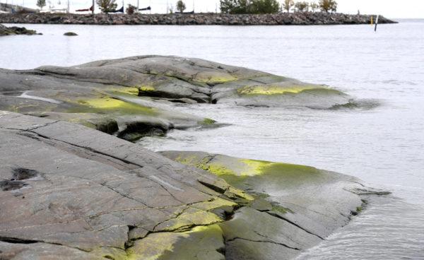 Itämeren rannikkoa. Kuvituskuva.