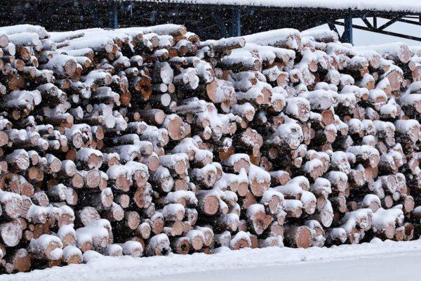 Ympäristökonsultti Ari Aalto on valokuvannut Inergian haalimia puita, joiden joukossa oli runsaasti läpimitaltaan 30-40-senttistä runkoja.