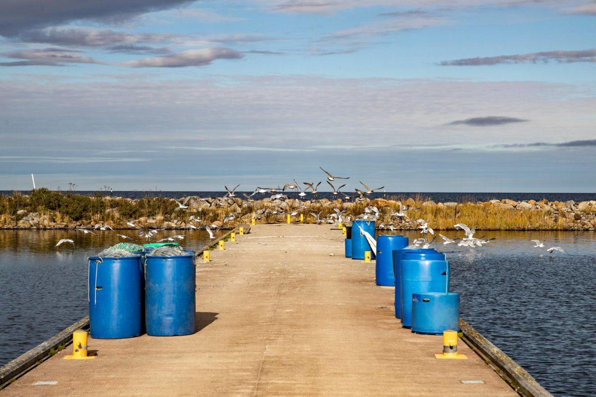 Lokit päivystävät Björköbyn uusimmassa kalasatamassa, Vikarskatissa.