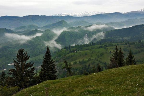 Merkittävä osa Euroopan jäljellä olevista luonnontilaisista metsistä sijaitsee Romaniassa, erityisesti Karpaattien vuoristoalueella.