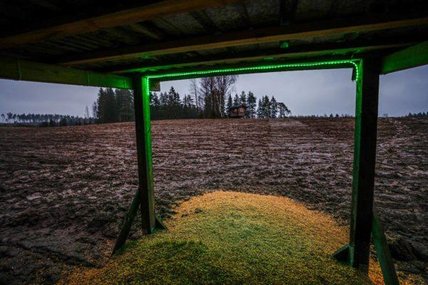 Miehikkälän Muurikkalassa villisikoja houkutellaan jauhetulla vehnällä. Pellon päällä on metsästäjän kyttäystorni.