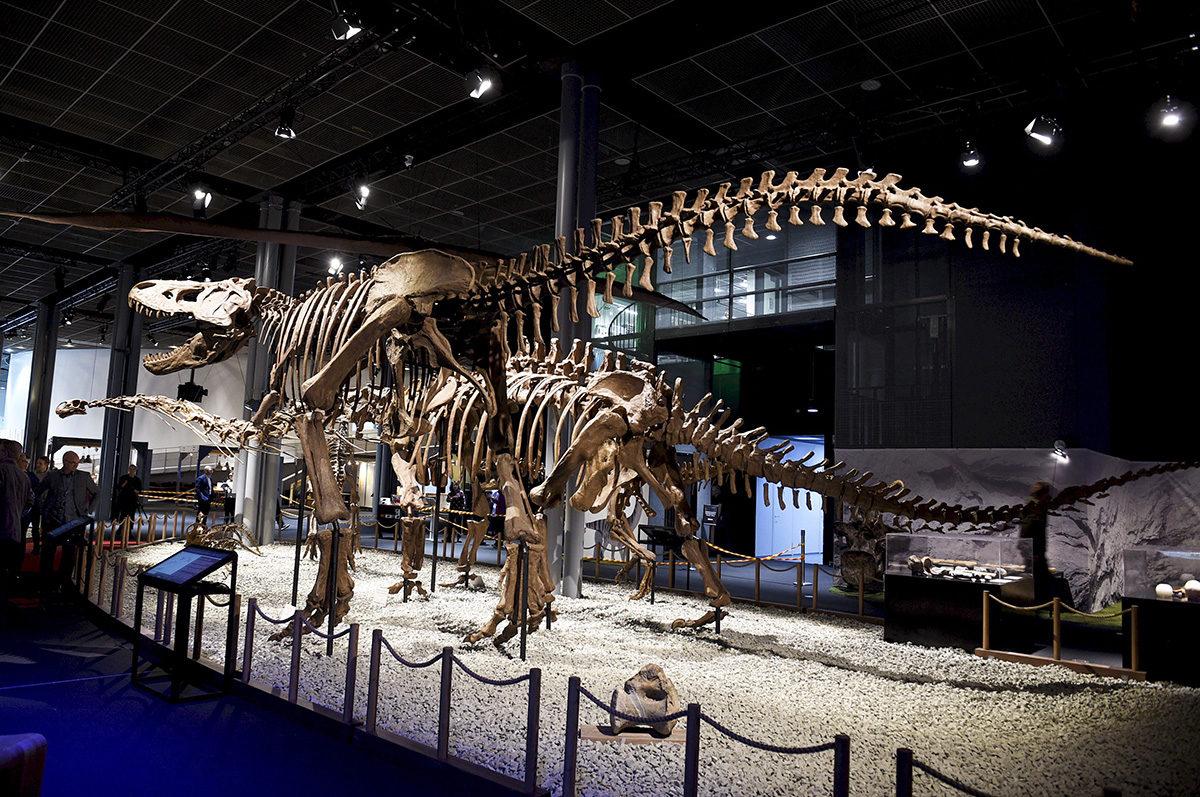 Dinosaurusten luurankojen malleja esiteltiin tiedekeskus Heurekassa Vantaalla helmikuussa 2019.