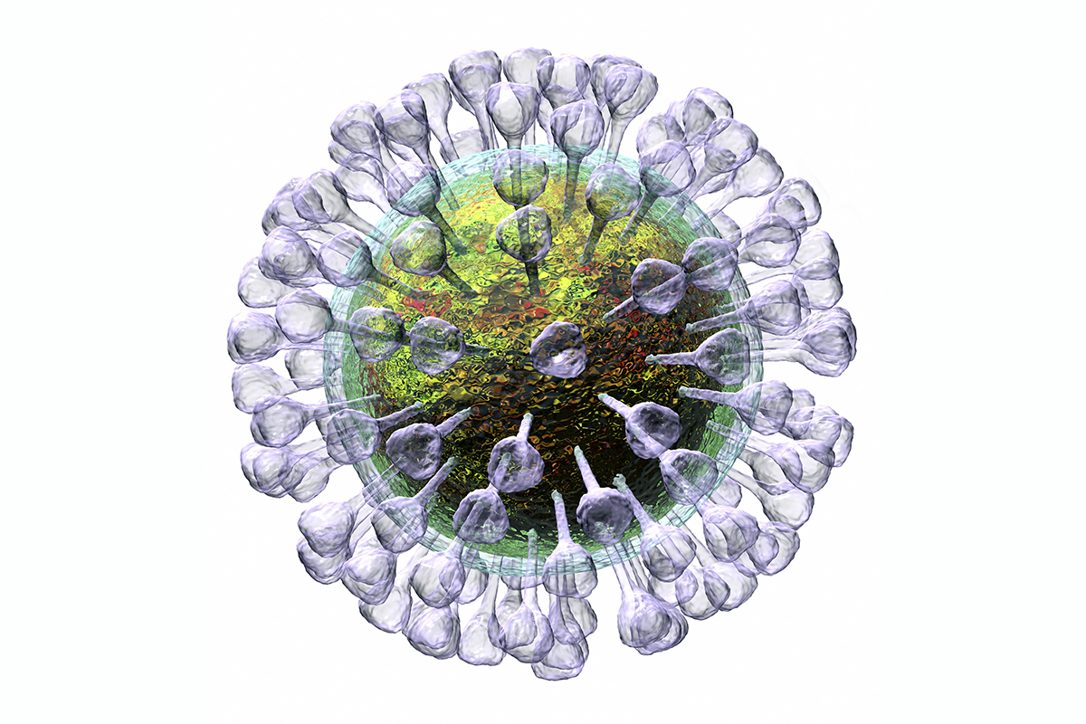 This image may not be used in educational posters Coronavirus particles, illustration. Different strains of coronavirus are responsible for diseases such as the common cold, gastroenteritis and SARS (severe acute respiratory syndrome). A new coronavirus (2019-CoV) emerged in Wuhan, China, in December 2019. The virus causes a mild respiratory illness that can develop into pneumonia and be fatal in some cases. The coronaviruses take their name from their crown (corona) of surface proteins, which are used to attach and penetrate their host cells. Once inside the cells, the particles use the cells' machinery to make more copies of the virus., Image: 496467325, License: Rights-managed, Restrictions: , Model Release: no, Credit line: Science Photo Library / Sciencephoto / MVPhotos