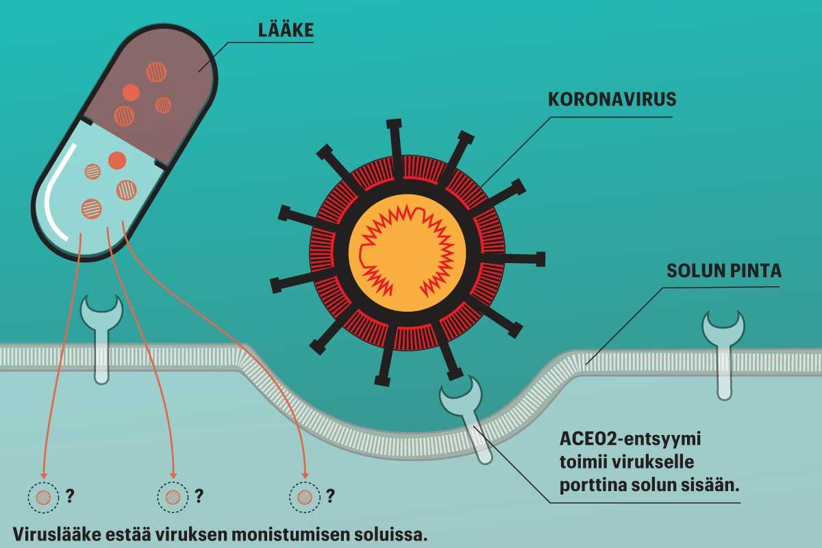 Viruslääkkeiden vaikutus perustuu siihen, että ne estävät viruksen lisääntymisen soluissa.