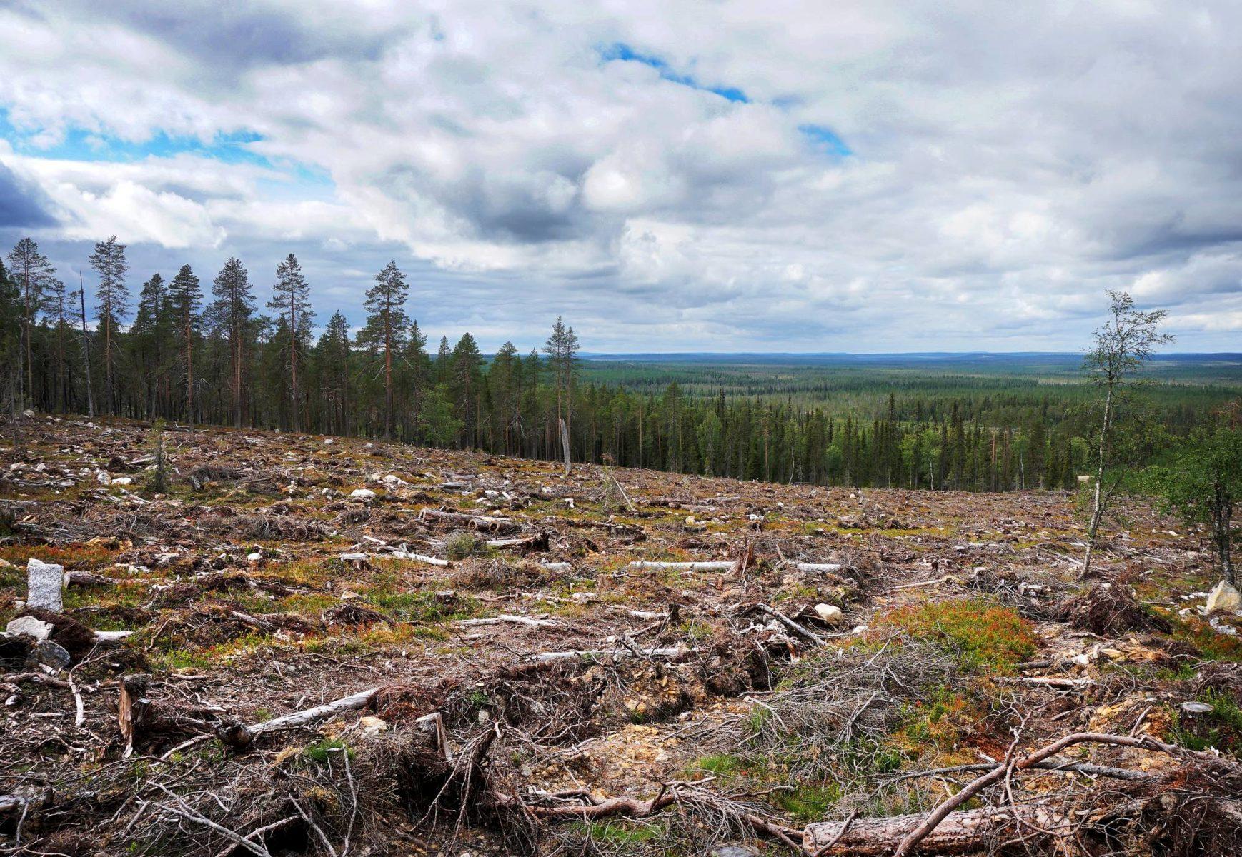 Hakkuut ovat herättäneet keskustelua Suomen metsänhoidon kestävyydestä. Kuva on otettu 13. elokuuta 2020 Sallan Lampi-Kaakkurivaarassa vuonna 2018 hakatulta alueelta.