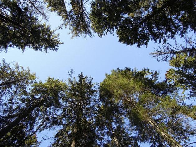 Ragvaldsin ikimetsää Meikon luonnonsuojelualueella Kirkkonummella.