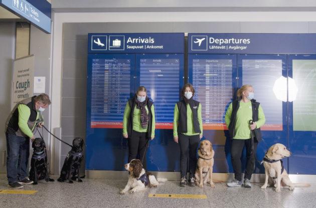 Uudet koronakoirat kävivät esittäytymässä lentokentällä 13. marraskuuta.